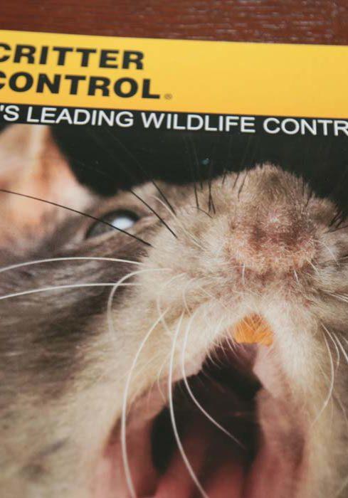 Critter Control Brochur